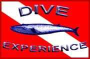 st croix dive shops dive experience