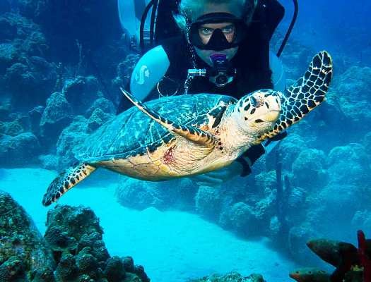 sea turtles st croix