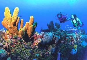 scuba diving in st croix usvi