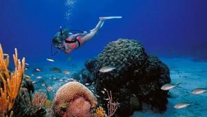 st croix scuba diving USVI