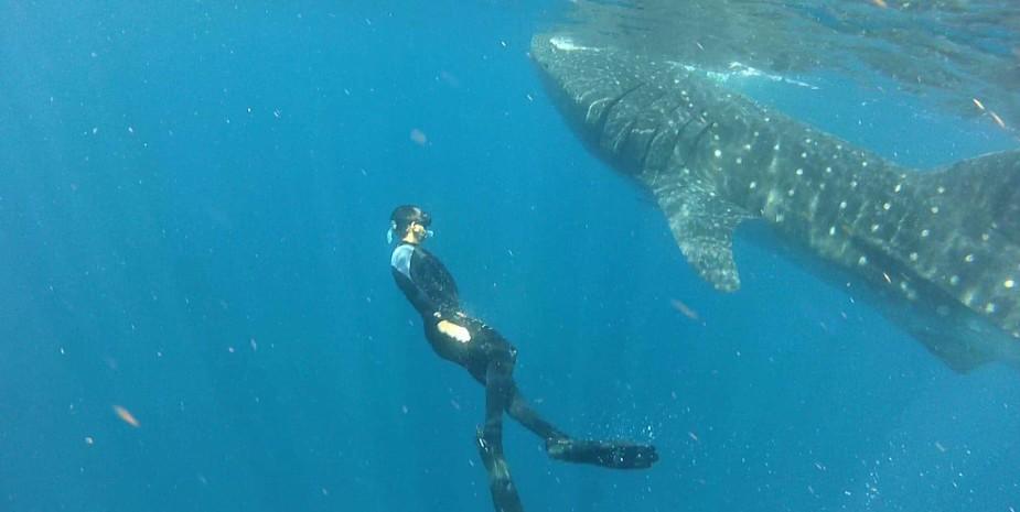 usvi diving best sites