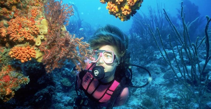 usvi diving coral
