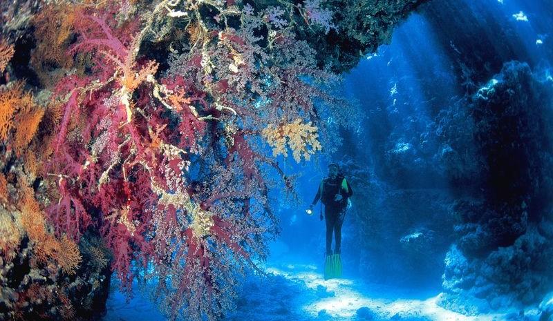 usvi diving coral reefs