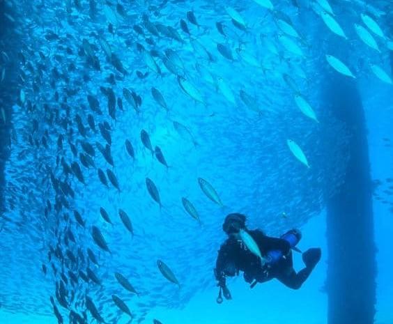 usvi diving fredricksted pier
