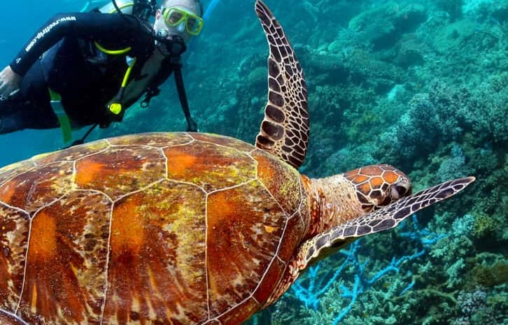 usvi diving sea turtles coral