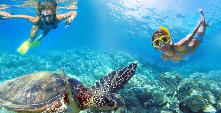 usvi diving sea turtles